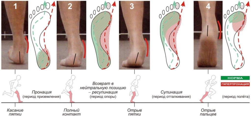 биомеханика ходьбы и бега